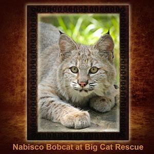 NFT-Nabisco-Bobcat
