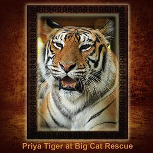 NFT-Priya-Tiger