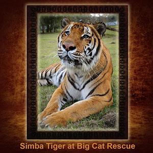 NFT-Simba-Tiger
