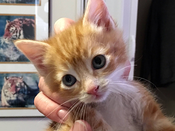 300 Kittens
