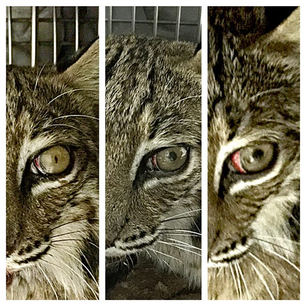 Thor Eye Improvement